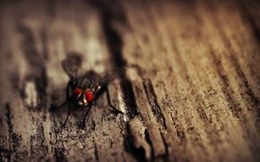 Картинка глаза, муха, дерево