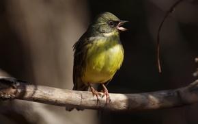 Картинка природа, весна, птичка, песня