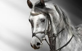 Картинка белое, Лошадь, серое