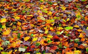 Картинка осень, листья, природа, ковер