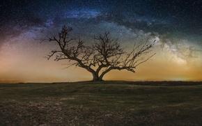 Картинка небо, звезды, ночь, дерево, млечный путь