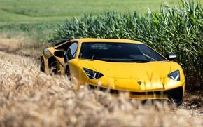 Картинка Lamborghini, Aventador, Superveloce, LP-750