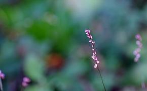 Картинка макро, цветы, размытость, Веточка, розовые, бутоны