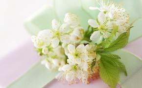 Обои цветы, макро, ветка, свет, белые, листья, цветение, вишня, весна