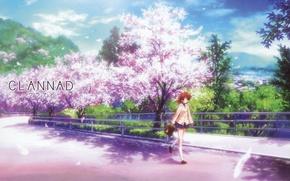 Картинка дорога, девушка, сакура, Clannad, Кланнад, Nagisa Furukawa