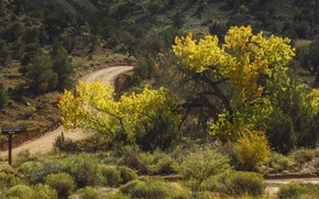 Картинка дорога, осень, деревья, colors, road, trees, Autumn, fall