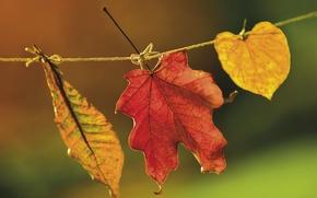 Картинка пейзаж, Листья, природа
