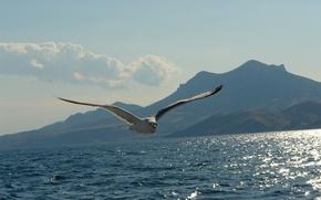 Обои море, горы, чайка