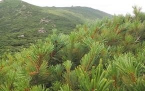 Картинка зелень, природа, пик, фигня, чехова