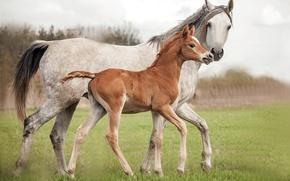 Обои кони, фон, природа