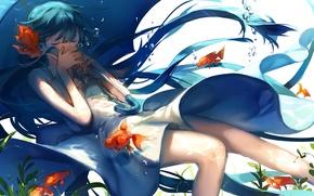 Картинка вода, рыбки, водоросли, пузырьки, зонт, Hatsune Miku, Vocaloid, длинные волосы, золотые, закрытые глаза