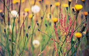 Обои цветы, wallpapers, фон, природа, растения, обои, поляна, травы, лето, картинки