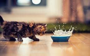 Обои кошка, миска, всплеск, котэ, молоко, котенок, кот