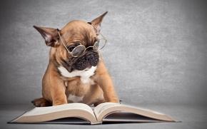 Картинка собака, очки, книга