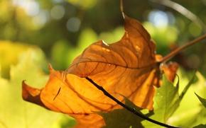 Картинка свет, желтый, лист