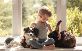 Обои собака, окно, кролик, настроение, на подоконнике, дружба, друзья, мальчик