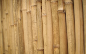 Картинка стебли, бамбук, деревяшки