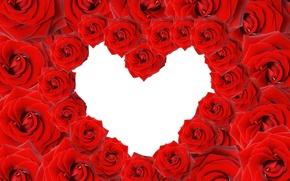Картинка цветы, сердце, розы, rose, heart, valentine's day