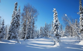 Обои небо, утро, лес, ель, зима, снег, мороз