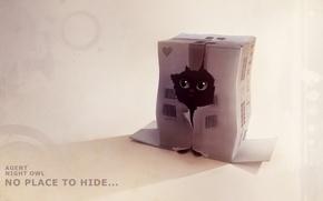 Картинка котенок, коробка, рисунок, дырка, прячется, apofiss, agent night owl