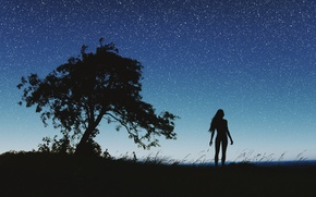 Картинка ночь, природа, силуэт