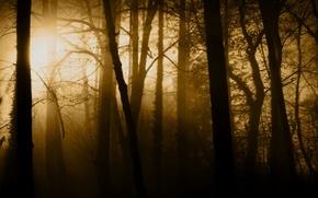 Обои лучи, свет, природа, туман, деревья, лес, стволы