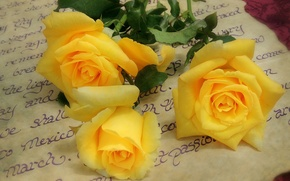 Обои письмо, розы, жёлтые, жёлтые розы