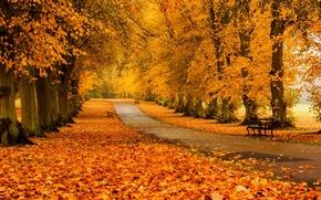Картинка осень, лес, трава, листья, деревья, скамейка, природа, парк, colors, hdr, grass, прогулка, forest, road, trees, …