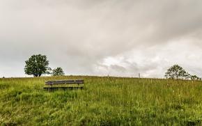 Картинка поле, лето, скамья