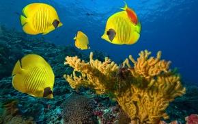 Картинка море, рыбы, под водой, underwater, fish, coral colony, sea, коралловые колонии