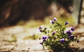 Картинка свет, цветы, природа, улица
