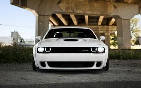 Картинка Dodge, Challenger, додж, Hellcat, челленджер, SRT, 2014