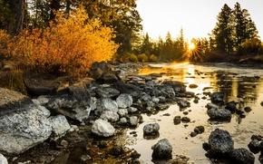 Картинка лес, природа, река, утро
