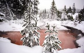 Обои зима, лес, снег, природа