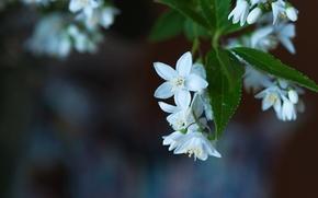 Картинка листья, макро, цветы, размытость, цветение