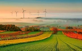 Картинка осень, туман, виноградник
