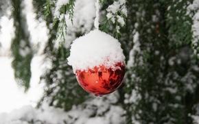 Картинка снег, ветки, отражение, ёлочная игрушка