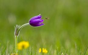 Обои трава, насекомое, сиреневый, цветок
