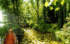 Обои красота, лес.тропинка, лилии, пруд