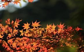 Картинка осень, листья, дерево, красиво
