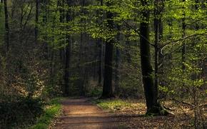 Картинка лес, лето, деревья, тропинка