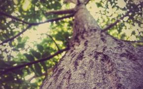 Картинка Природа, Дерево, Лес, Лето, Размытие, Кора