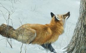 Картинка зима, лес, снег, арт, лиса, Robert Bateman