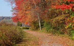 Картинка дорога, осень, листья, road, autumn
