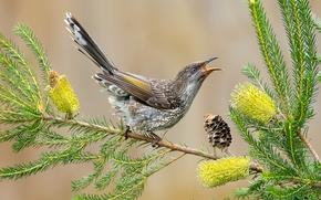 Обои цветы, перья, ветка, клюв, листья, хвост, птица, шишка