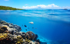 Картинка Небо, Облака, Рыбы, Кораллы, Животные, Подводный Мир