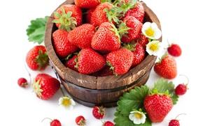Обои цветы, ягоды, листва, земляника, бочка, клубника
