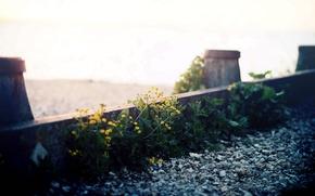 Картинка макро, цветы, улица, гравий