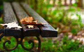 Картинка листья, макро, скамейка, фон, widescreen, обои, лавочка, листик, лавка, wallpaper, листочек, скамья, широкоформатные, background, полноэкранные, …