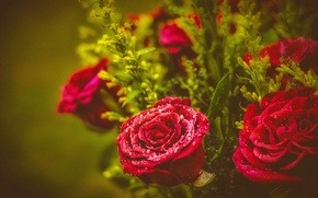 Обои капли, розы, букет, бутоны
